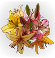 bouquet yellow and pink lilies on a white vector image