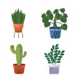 collection indoor plants in pots home decor vector image vector image