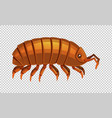 lice on transparent background vector image vector image