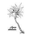 palm leaves agave attenuata hand drawn engraving vector image vector image