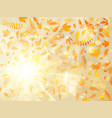 beautiful autumn background with maple autumn vector image vector image