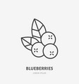 blueberry flat line icon forest berry sign vector image vector image