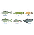 collection fish species with name subscription vector image