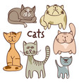 colorful doodle cats isolated on white background vector image