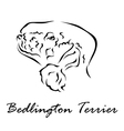 Bedlington Terrier vector image vector image