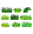 flat set of different decorative grass vector image