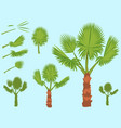 set of fan palm round leaves fan palm tree vector image vector image