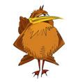 cartoon image of bird vector image