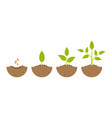 growing plant in process on white background vector image vector image