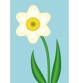 Narcissus vector image vector image
