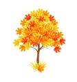 red maple tree vector image vector image