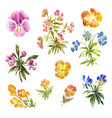 Set of watercolor little pansies isolated on white