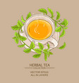 stevia cup of tea vector image
