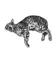 Yawning cat vector image