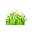 flat of fresh green grass vector image