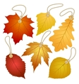 Hanging tags with autumn leaves vector image vector image
