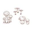 mushrooms orange cap boletus fly agaric and vector image