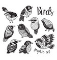 graphic set with hand drawn exotic birds vector image vector image