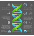 infographic template with dna structure vector image