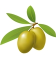 Olives with leaves on white background vector image