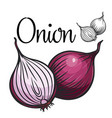 onion drawing icon vector image vector image