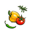 tomato bell chili pepper rosemary bbq spices vector image vector image