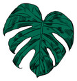 with tropical monstera leaves vector image