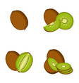 kiwi whole fruit slice vector image vector image
