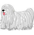 komondor dog breed vector image vector image