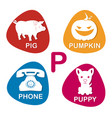 alphabet in p letter for pig pumpkin vector image