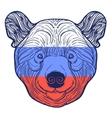 Animal teddy Bear head print for adult anti stress vector image vector image