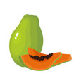 bright of fresh papaya vector image