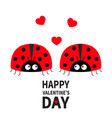 happy valentines day two cute red lady bug vector image vector image