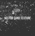 sand texture vector image vector image