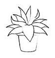potted plant nature leaf gardening decoration vector image