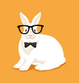 rabbit with glasses vector image vector image