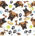 smiling dog boxer vector image vector image