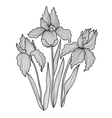 decorative iris flowers vector image