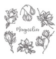 magnolia flowers drawing ink hand drawn set floral vector image vector image
