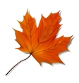 Orange maple leaf vector image