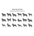 shepherd dog breeds sheepdogs collection isolated vector image vector image