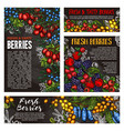 wild forest and farm berry fruits vector image vector image