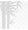 bamboo branches leaves overlay effect transparent vector image