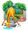 Computer screen with giraffe drinking water vector image vector image