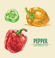 digital detailed line art color pepper vector image vector image