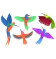 hummingbird birds set isolated on white vector image vector image