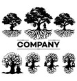 tree and bear logo vector image vector image