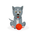 pit bull puppy isolated playful purebred pit bull vector image