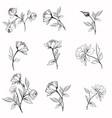 set elegant line flowers for logotypes vector image