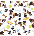 smiling dog jack russell terrier vector image vector image
